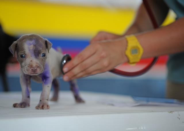 lékařská péče o štěně