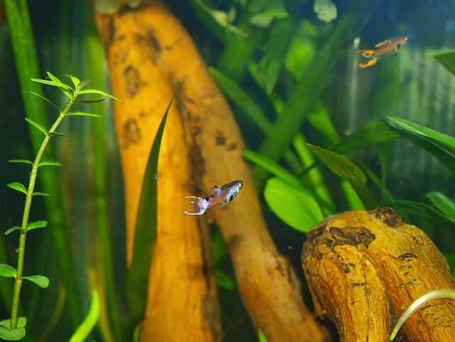 akvárium a rybky